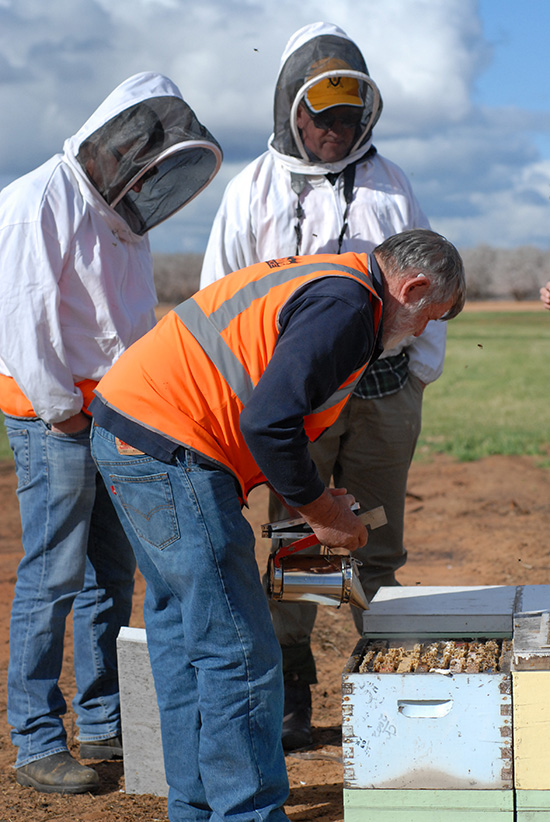 inspecting hives for almond pollination