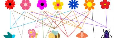pollination network